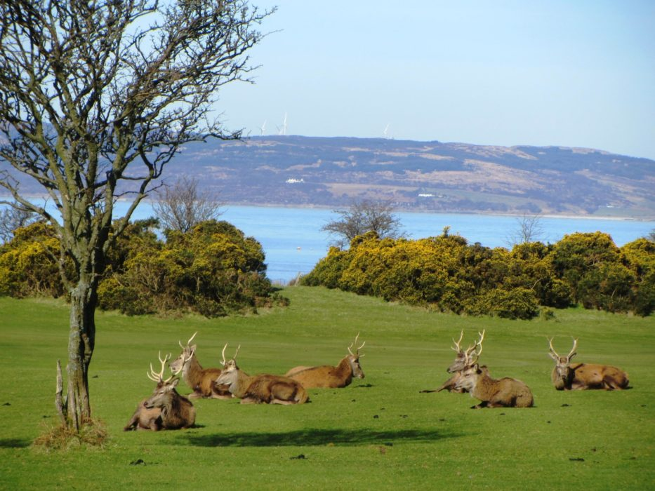 Walk 1 - Deer At Lochranza