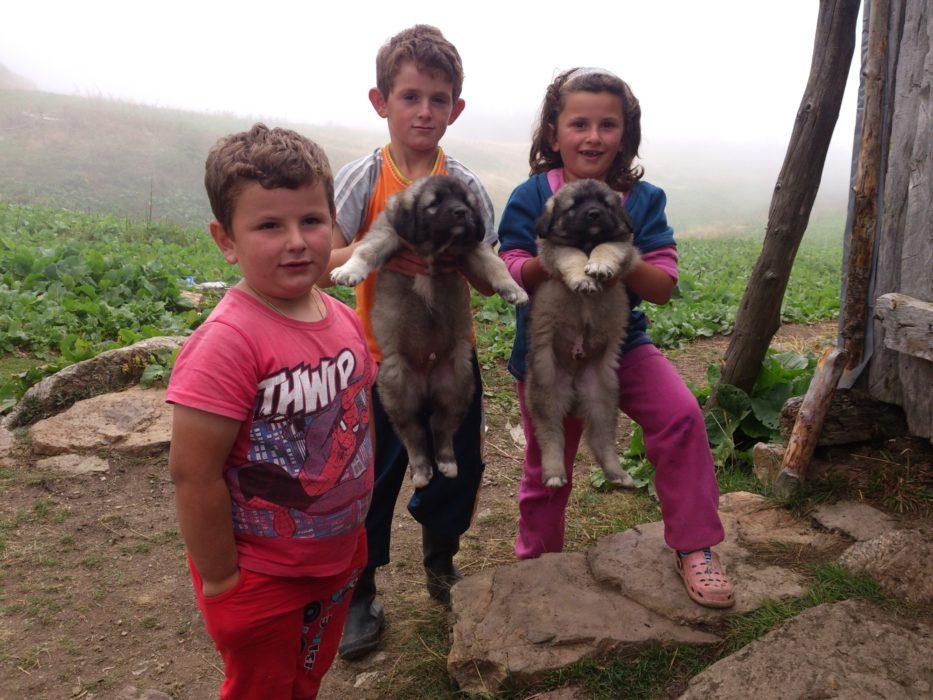 Children Holding Puppies
