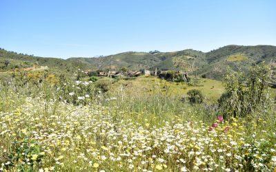 Impressive Wildflower Display In Front Of Deserted Varzea Do Velho