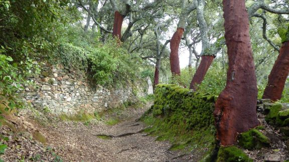 Aracena Ancient Bridleway Close To Linares