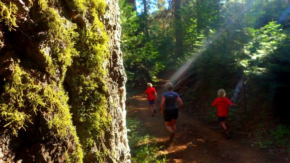 Running Amongst The Redwoods