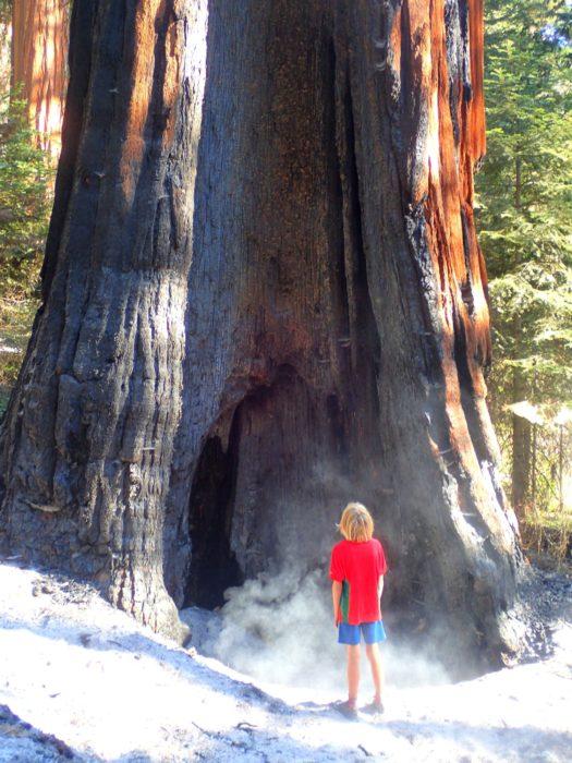 A Redwood