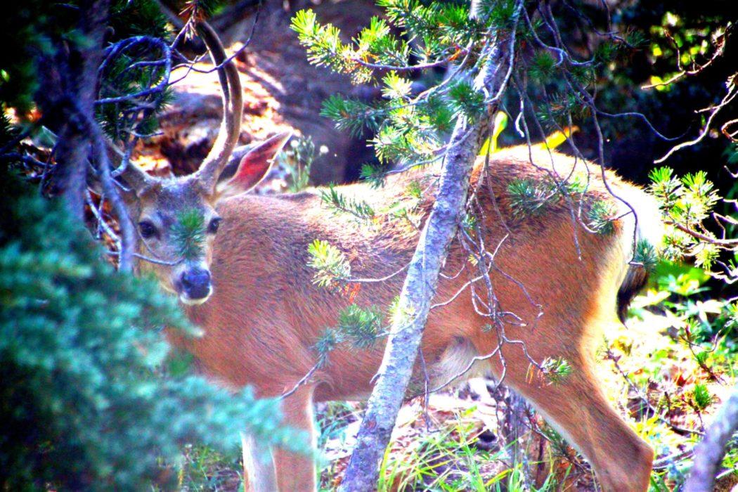 High Sierra Wildlife