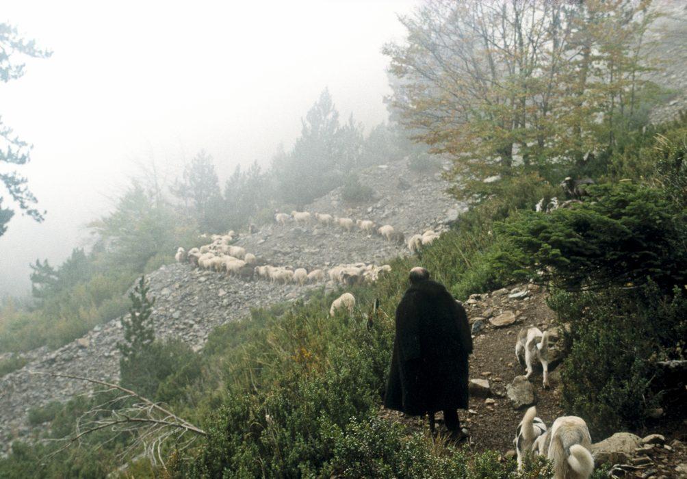 009 Smolikas: Flocks In The Mist