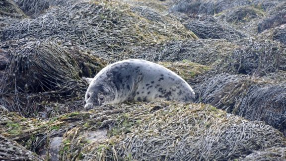 5 Seals Are Often Seen Along The Shore