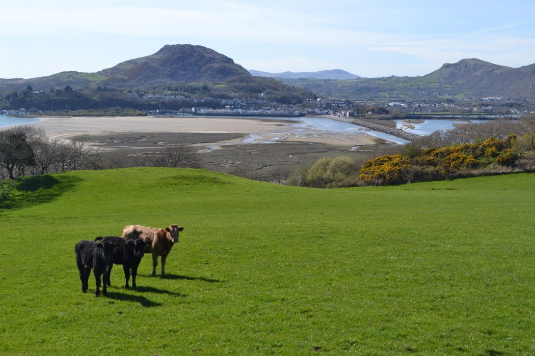 The lovely view back to Porthmadog and the hill of Moel-y-gest