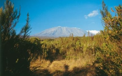 082 The Distant View Of Kibo Here Seen Across The Heathmoorland Is The Ultimate Goal For Trekkers On Kili