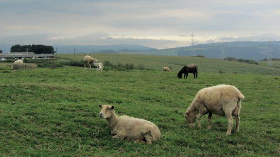 Farmland near As Travesas