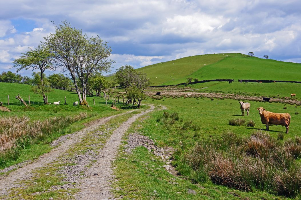 A track climbs towards the rounded hill of Moel-Ddolwen.