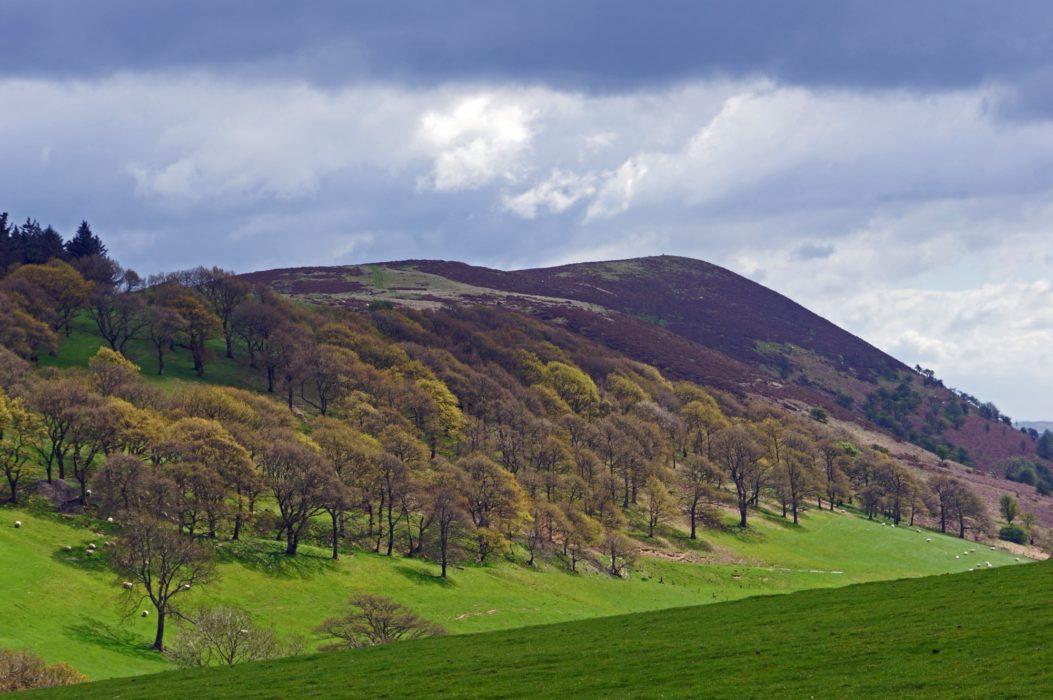 A land of shapeless hills, this one being Ysgwd-ffordd near Tynypant.