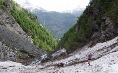 There were large deposits of snow even at low altitudes. Above Trift, walkers and runners are greeted by one of the finest and most sudden views in the Alps