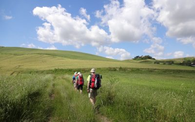 We walk through fields of grain on the way to Rome. At the top of the hill ahead will be the first glimpse of St. Peter's Basilica, 30 km in the distance. (Way of St Francis/Via di Francesco)