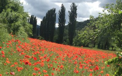 The quiet and lush Valnerina, home to fishing, mountain biking, pilgrimage walking and poppies. (Way of St Francis/Via di Francesco)