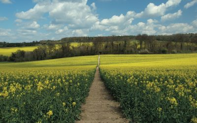 From Nuffield the Ridgeway heads across open fields (photo: Steve Davison)