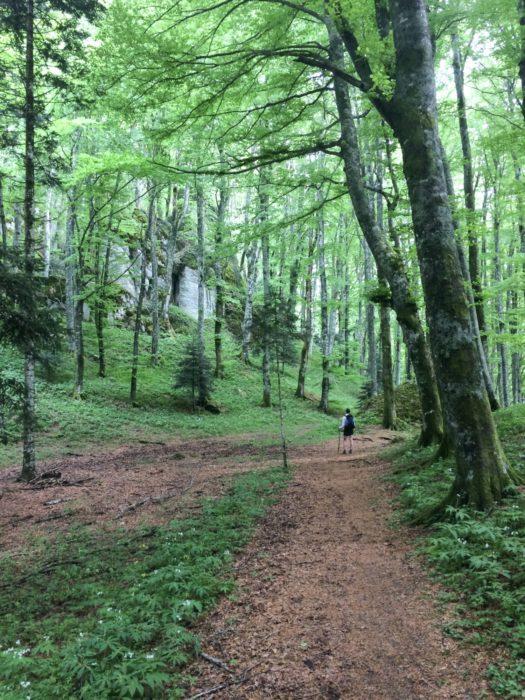 Beechwoods beneath Mt Penna near Santuaria della Verna
