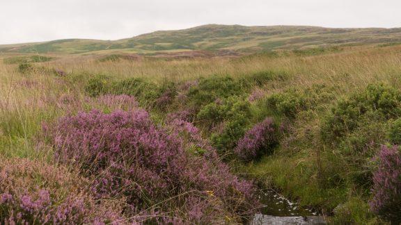 Kilhern Moss