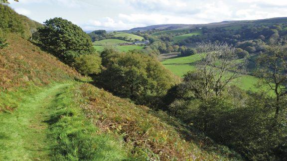 Pleasant Footpath Through Coed Y Castle