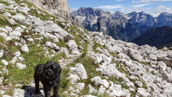With his broad paws and natural agility Khampa is well suited to the mountains - In the Dolomites, South Tyrolia