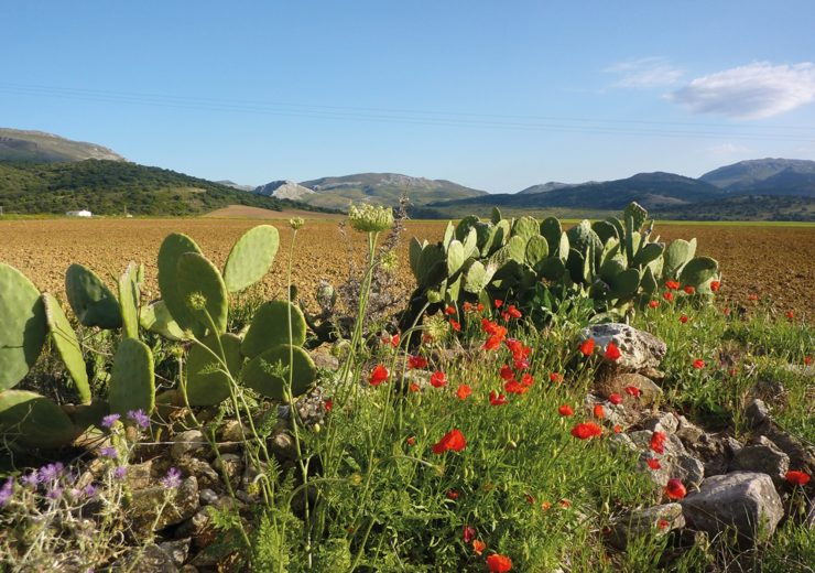 An intro to… the Andalucían Coast to Coast Walk