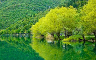Trees lining Lake Scanno