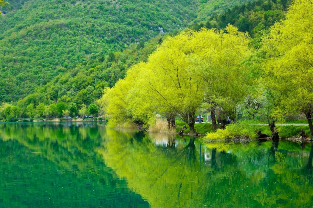 Trees lining Lake Scanno