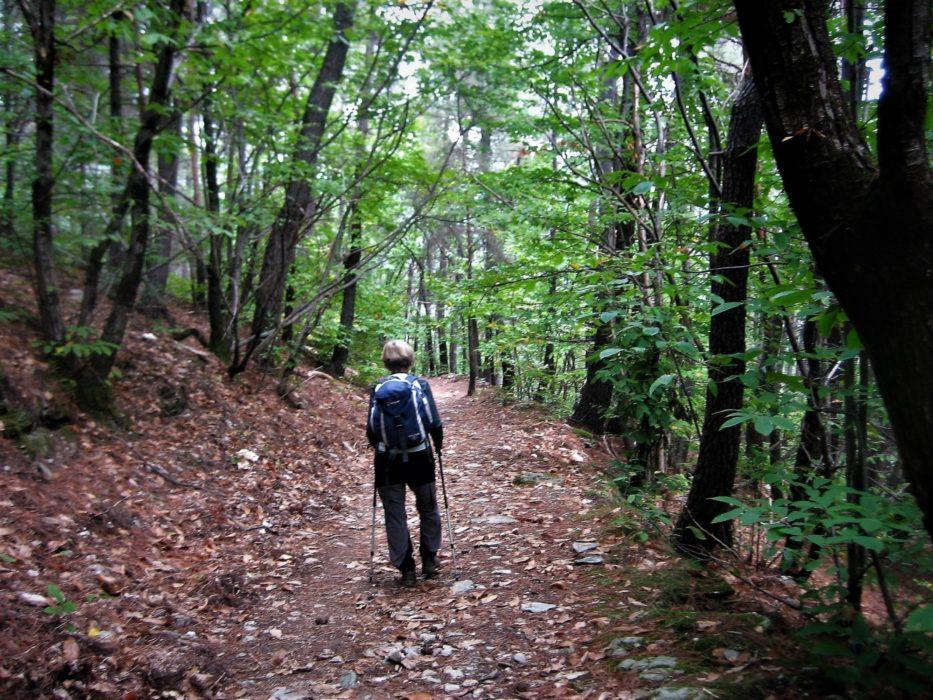 14 Woodland Trail