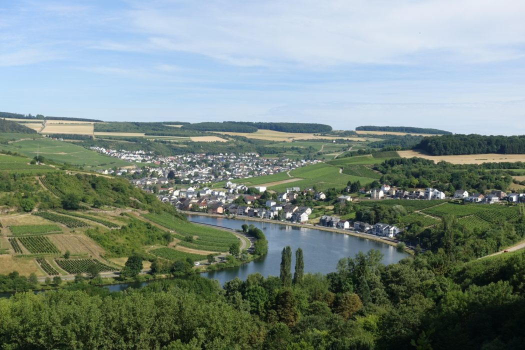 Vineyards around Machtum (Luxembourg)