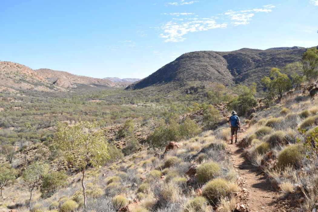 Walking between balls of spinifex grass deep in the wilderness