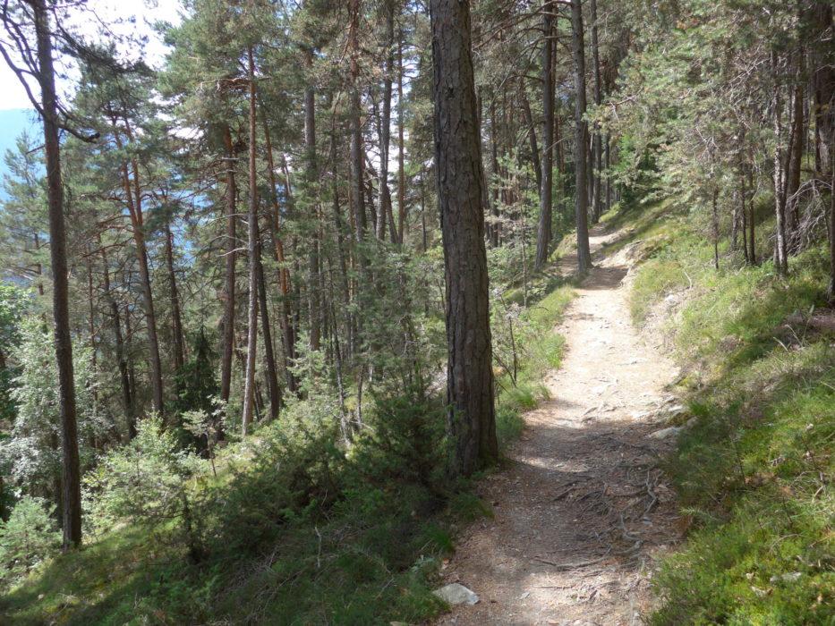 A shady stretch of the Keschtnweg, near Feldthurns