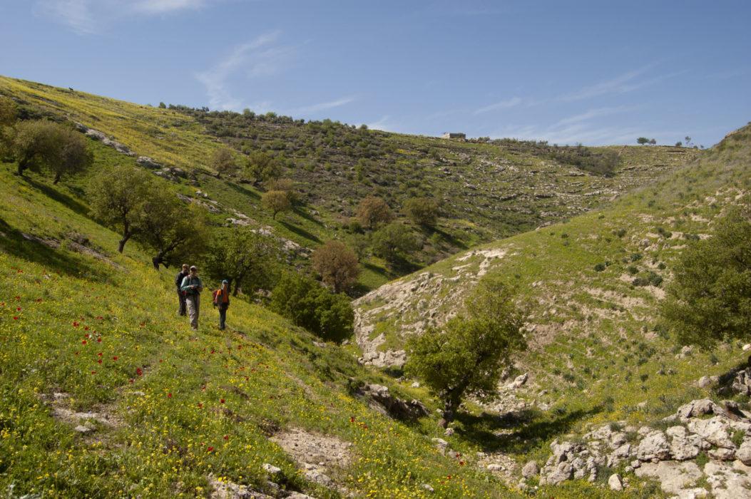 Springtime in north Jordan, exploring the route for the Jordan Trail through Wadi abu Salih.
