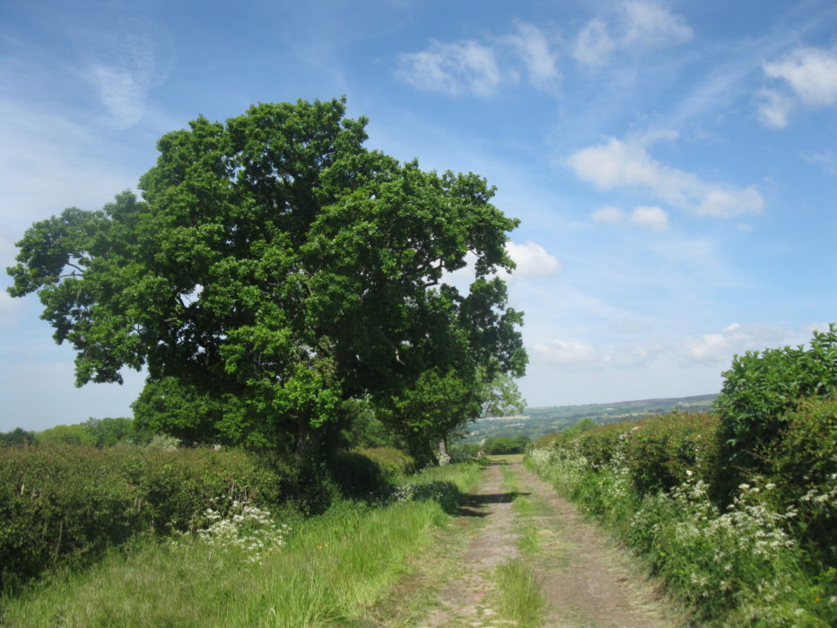 Footpath through the Ribble Valley