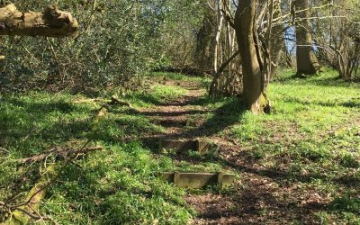 Ancient woodlands in the Cotswolds