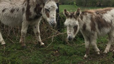 A couple of my New Forest walking companions