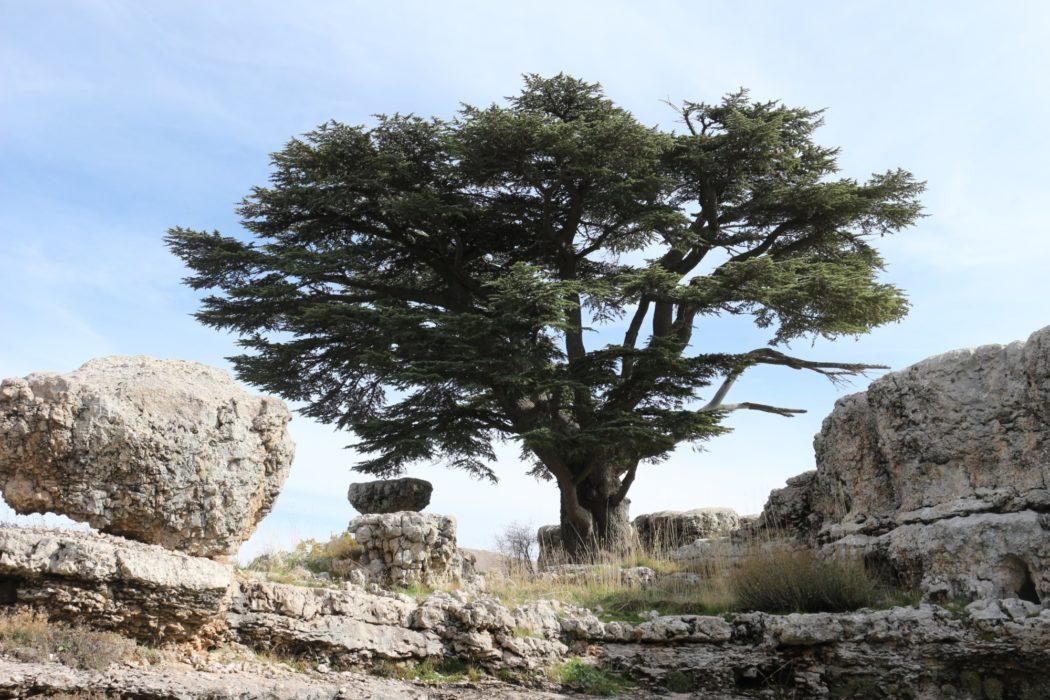 Tannourine Cedars Nature Reserve