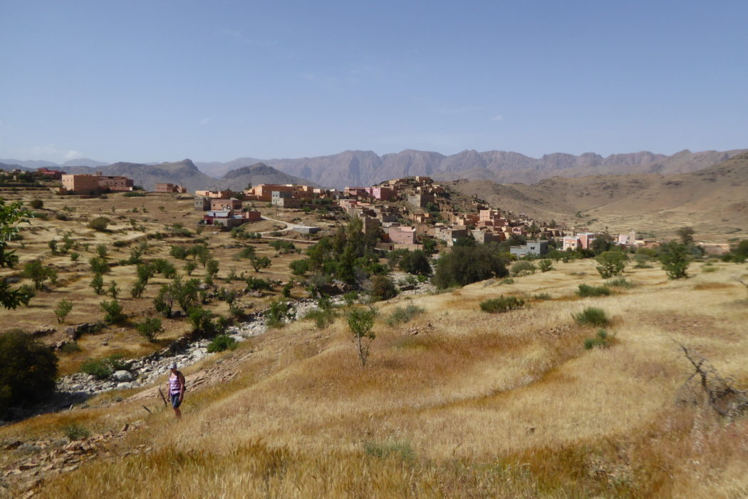 An easy ascent from the Ameln Valley skyline leads to the fine upper pastures of the east flank of Adrar Mqorn. Here the path is littered with lavender dentata in springtime and the walking is joyful.