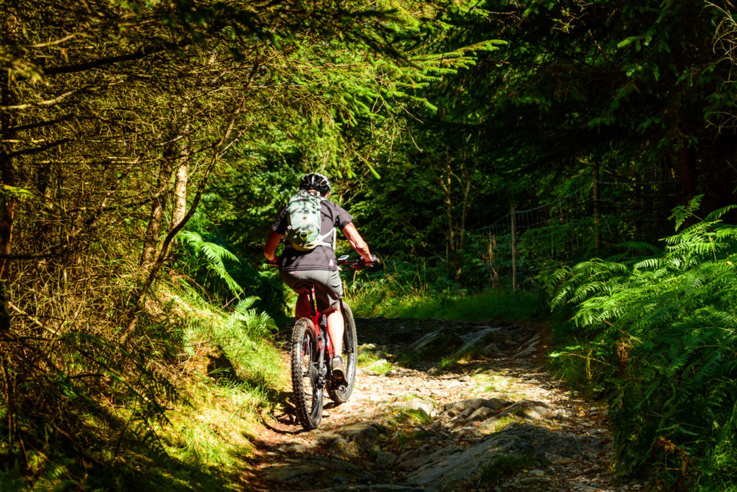 Bernie Carter on the tricky climb of Park Plantation, Grizedale Forest. The extra boost of the e-bike really helps on the steepest bits.