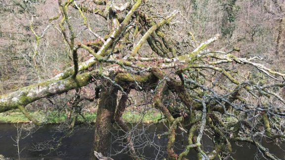 Ancient woodland near Staveley