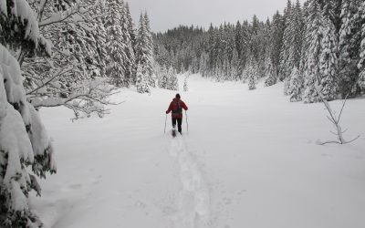 Untracked fresh snow in the Forêt de Risoux, French Jura