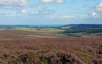 Purple heather moorlands give way to green fields and the coast