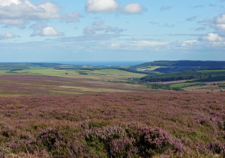 North York Moors – now available in purple