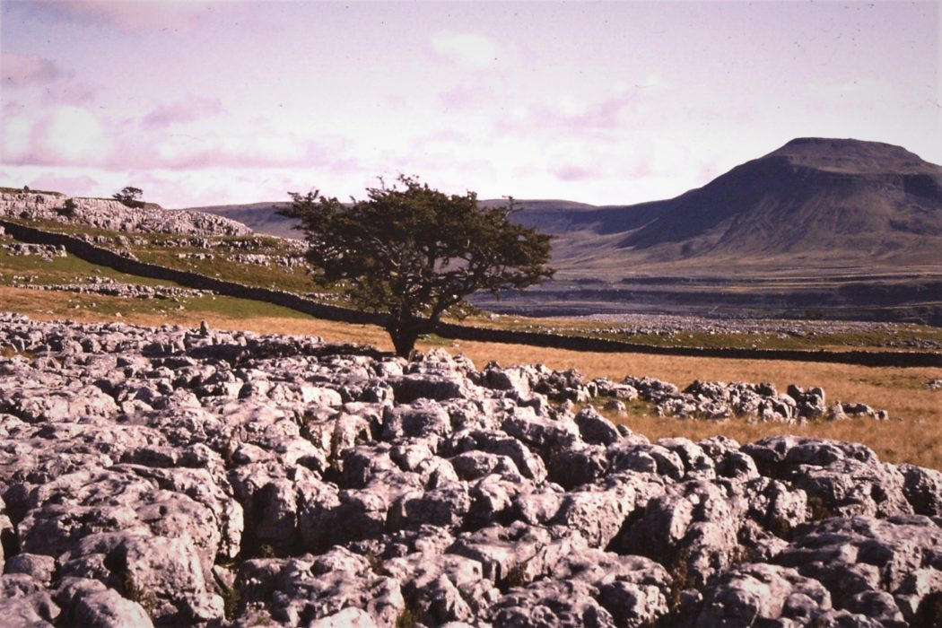 Ingleborough And The Limestone Pavement From The Sw