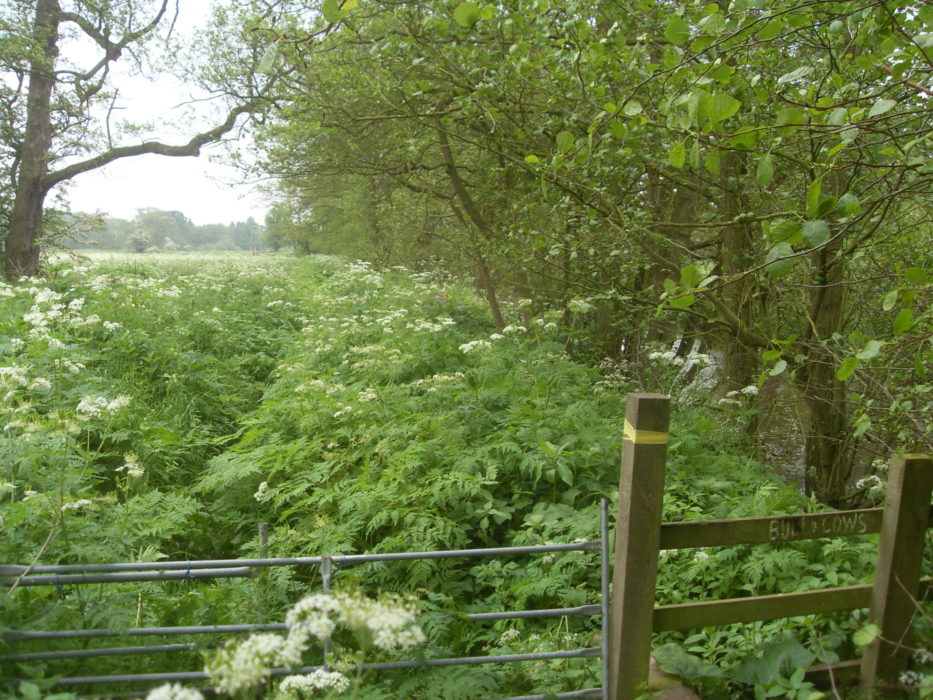 Overgrown public footpath