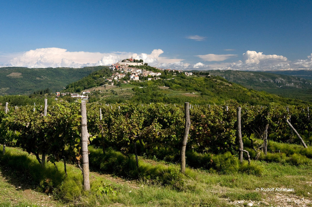 Surrounded by vineyards, the medieval hill town of Motovun lies on the Parenzana cycle route, Istria, Croatia © Rudolf Abraham