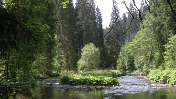 006 Near the confluence of the Wutach and Haslach Rivers