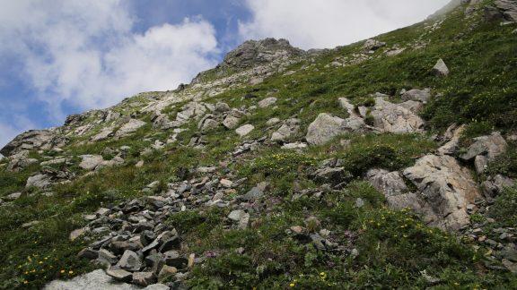 Kitadake16 Wildflowers compete for space among greenstone boulders