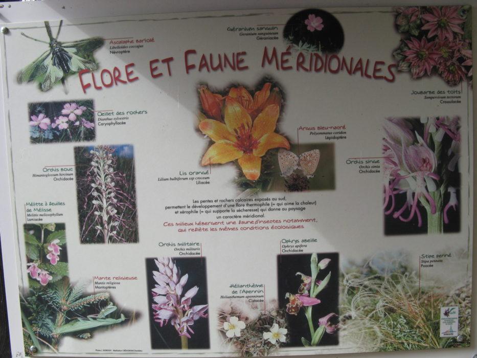 Information board 'Flore et Faune Méridionales'