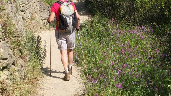 22 Trekking Poles Are Always Handy