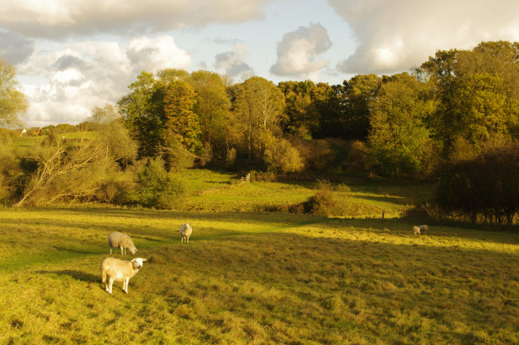 Sheep pasture by Wignall Brook, below Lawford