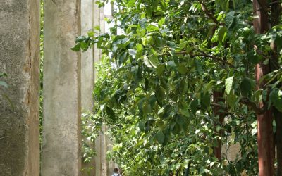 One of the few 'limonaie' lemon orchards still operating on Lake Garda