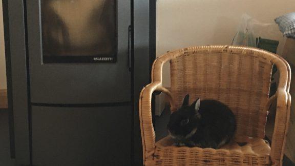 Roger The Rabbit At LArpont